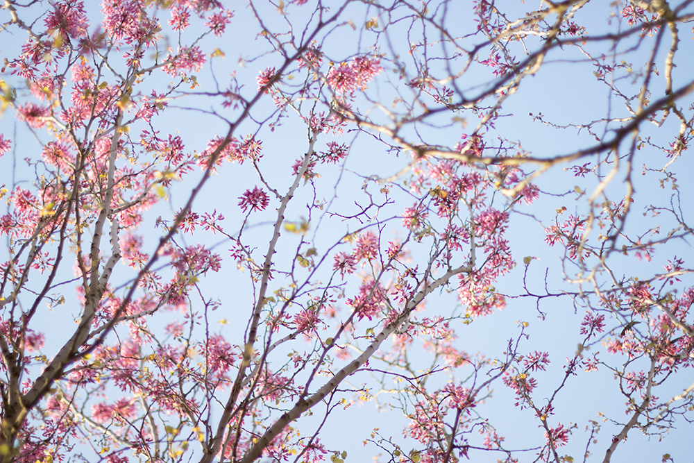 Spring Blossom: Some photos